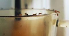 kill fruit flies
