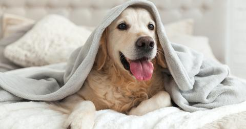 dog-hotels-1601668573584.jpg