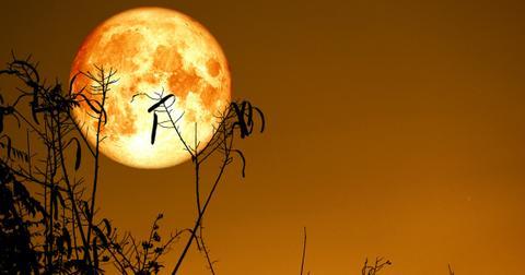 harvest-moon-1601568960754.jpg