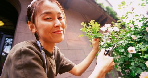 How to Get Started Urban Gardening