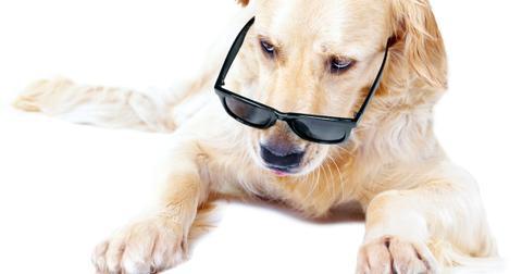 rescue dog actors