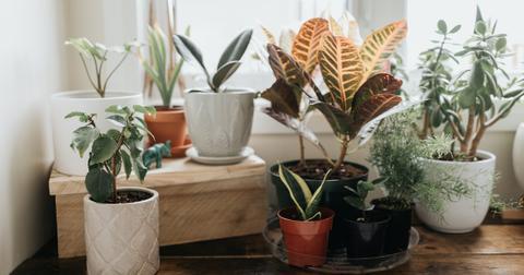 house-plants-winter-1604689877680.jpg