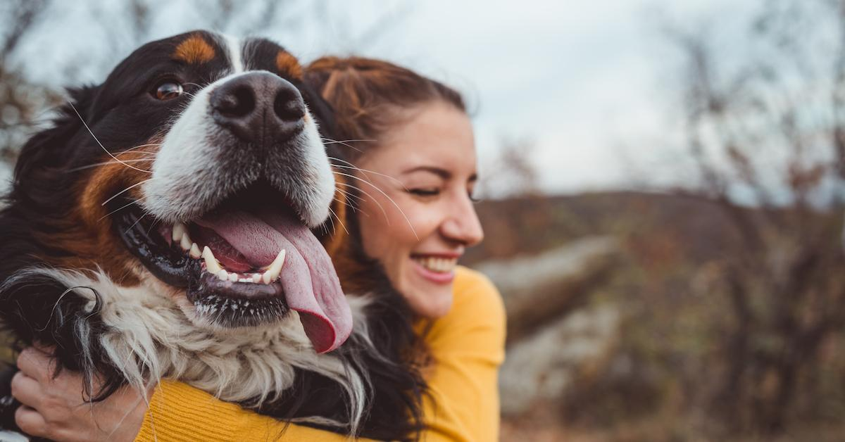 National Rescue Dog Day 2019: How to Honor Dogs Today