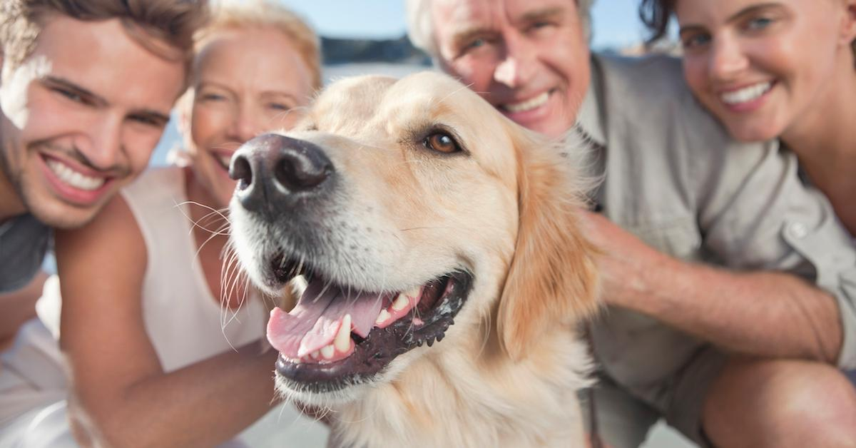 Natural flea and tick prevention for dogs