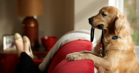 why-does-my-dog-follow-me-everywhere5-1610486907578.jpg