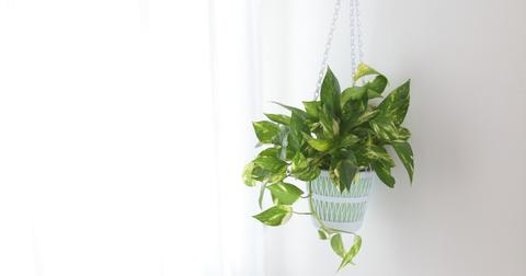 philodendron-indoor-plant-1580934766465.jpg