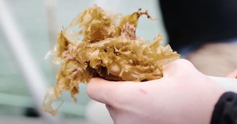 seaweed-food-1602084996272.png