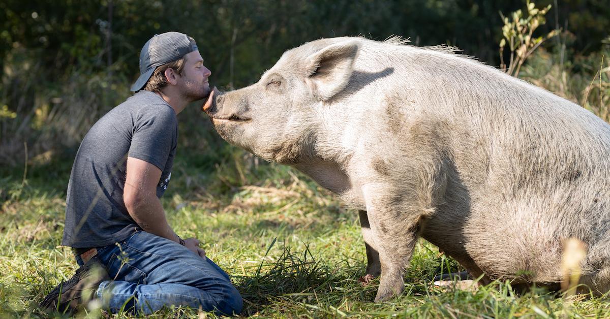 saved-by-the-barn-1590159777057.jpg