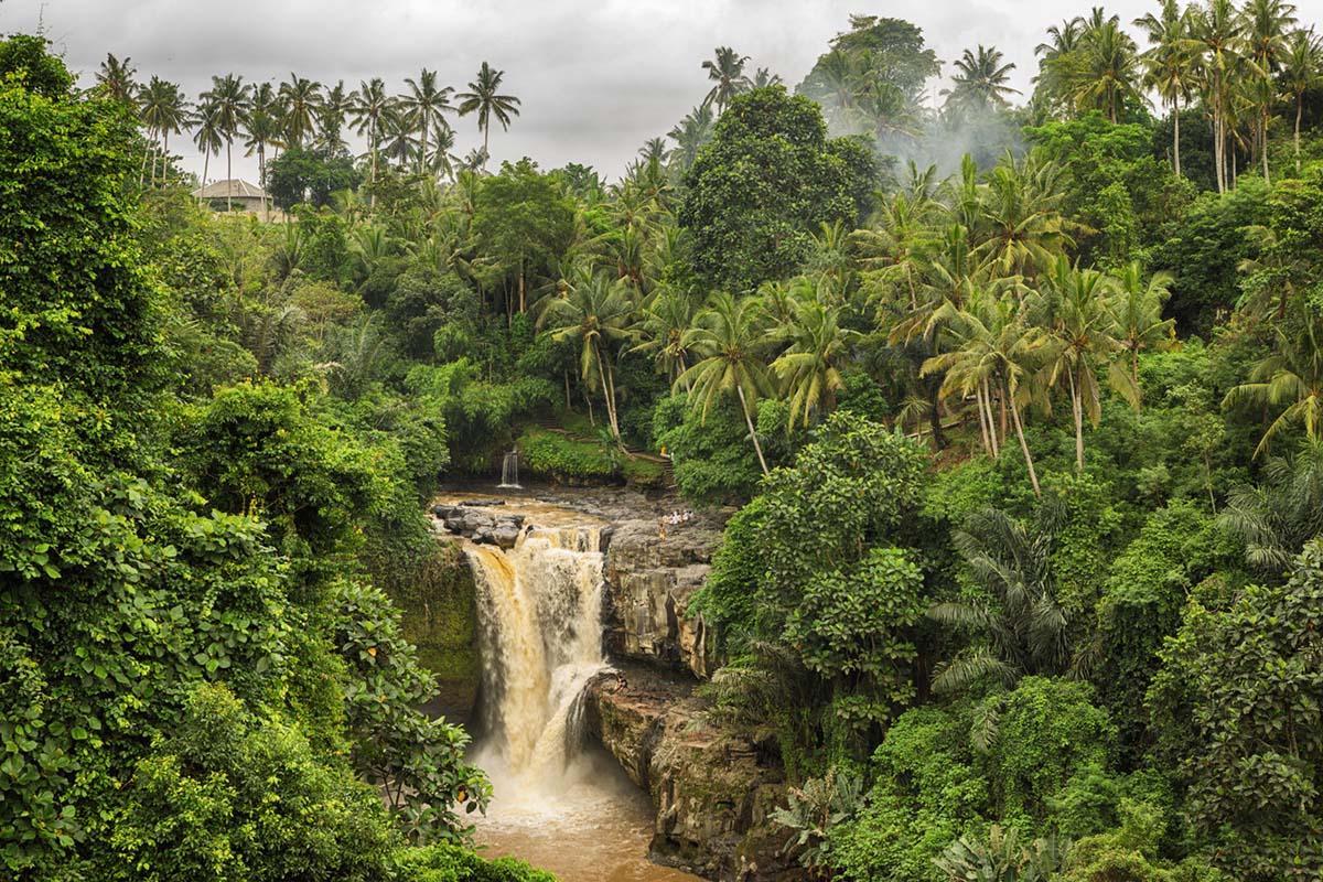 rainforest-ban-indonesia-1544721660855.jpg