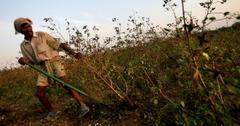 印度农业抗议活动