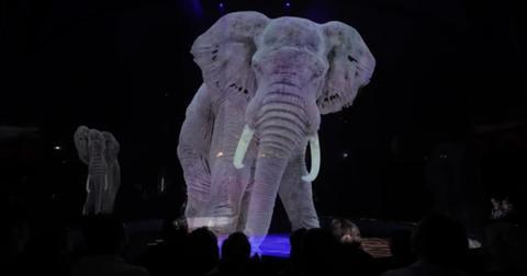 circus-animal-holograms-1559672306139.jpg