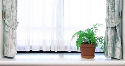 maidenhair-fern-indoor-plant-1580934748903.jpg