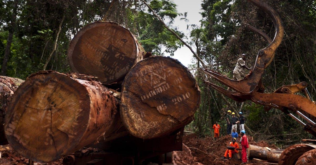Congo Deforestation