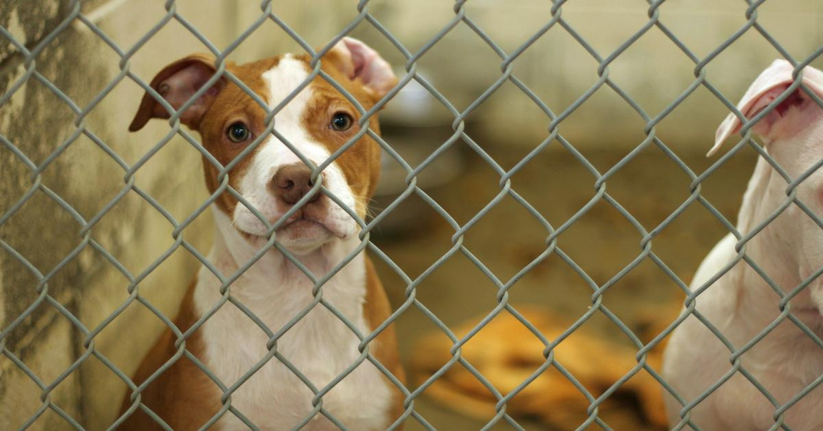 dog-cat-pet-cruelty-1554218991314.jpg