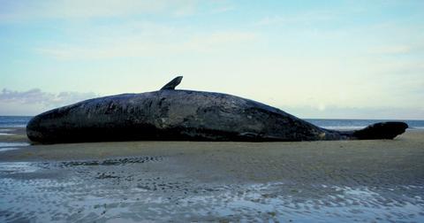 quantos-animais-são-mortos-por-poluição-de-plástico3-1609992085966.jpg