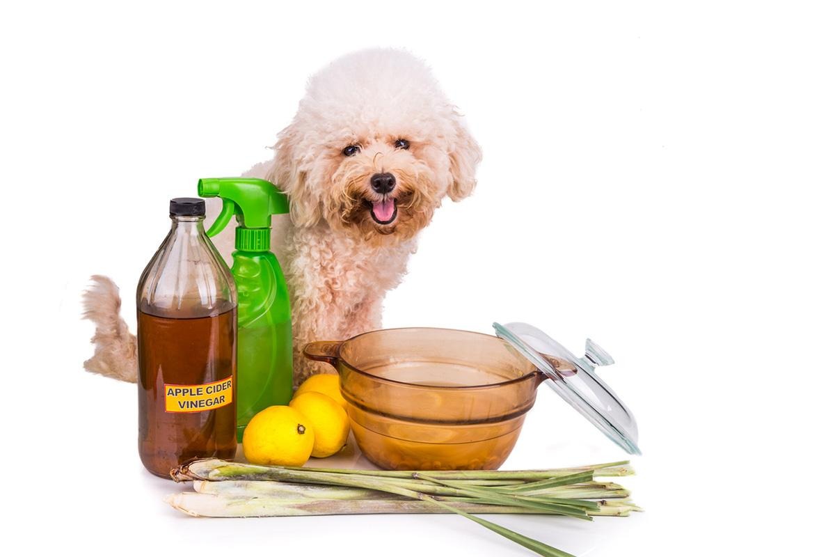 lemon-water-flea-spray-1565025609278.jpg
