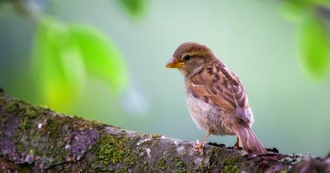 birding happiness