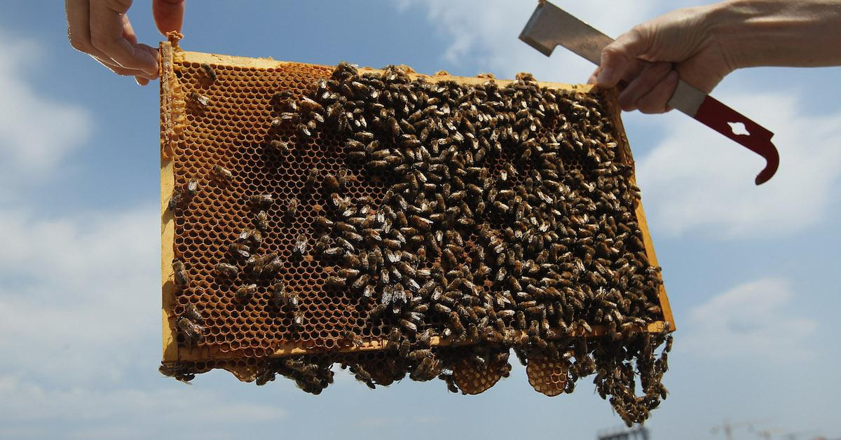 How the honey industry affects the environment
