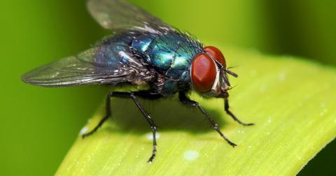 best-indoor-fly-spray3-1604065013945.jpg