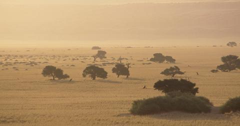 沙漠化是什么