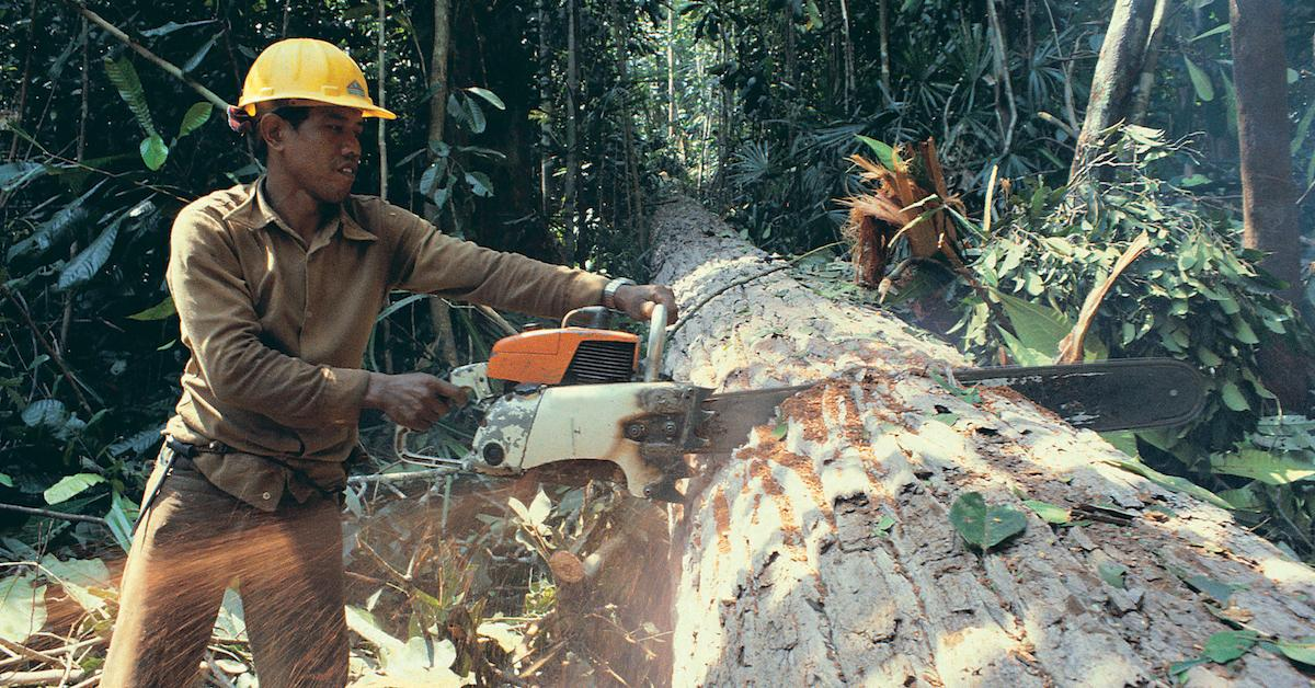 difference between deforestation and logging