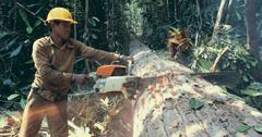 砍伐和记录之间的差异