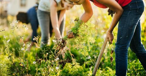 weeds vegetable garden