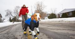 Does my dog need a jacket in winter?