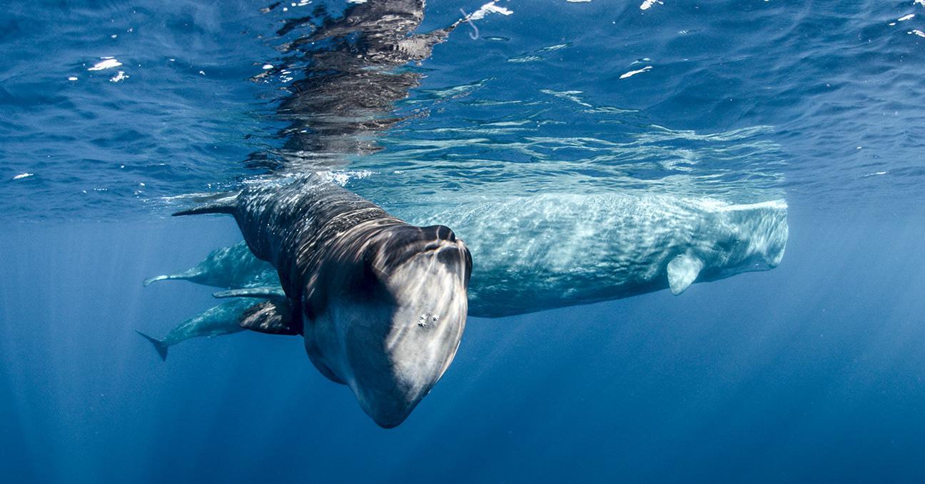 whale-1507325742549-1507325746215.jpg