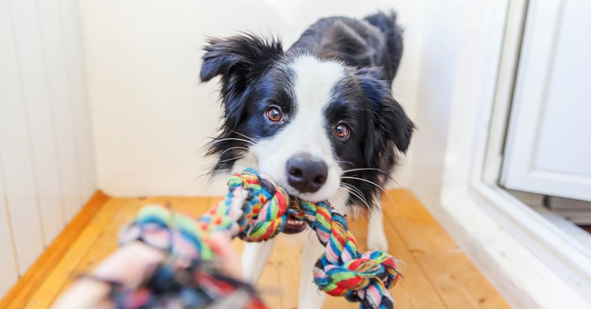 What Are the Best Eco-Friendly Dog Toys?