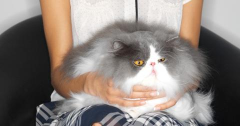 what-does-it-mean-when-my-cat-purrs2-1609903210768.jpg