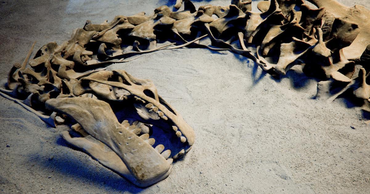 Did climate change kill the dinosaurs?