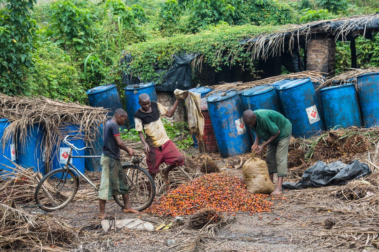 environmentally friendly palm oil production