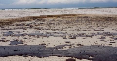 dead dolphins mauritius oil spill