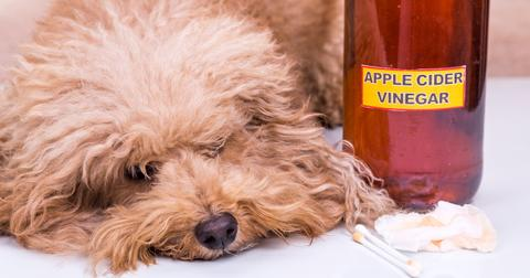flea-treatment-apple-cider-vinegar-1565025518403.jpg