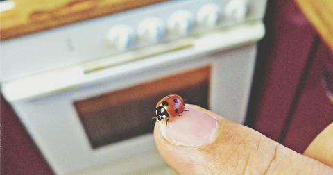 ladybug-infestation-1603997285022.jpg