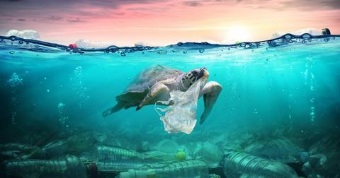 ocean-pollution-1598986193310.jpg