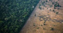 亚马逊雨林可能会变成大草原