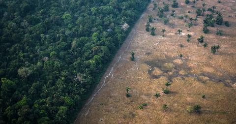 amazon rainforest could become a savanna