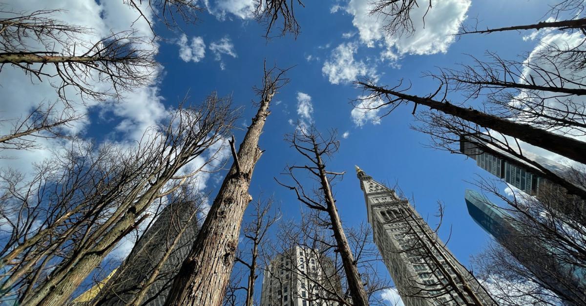 Maya Lin Ghost Forest