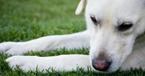 What to do with dog poop