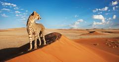wildlife climate change