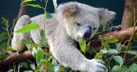 what-is-an-endemic-species5-1605618743672.jpg