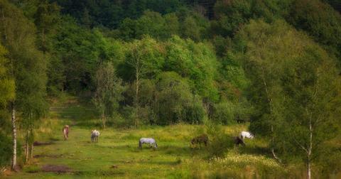 有机农业对生物多样性的积极影响