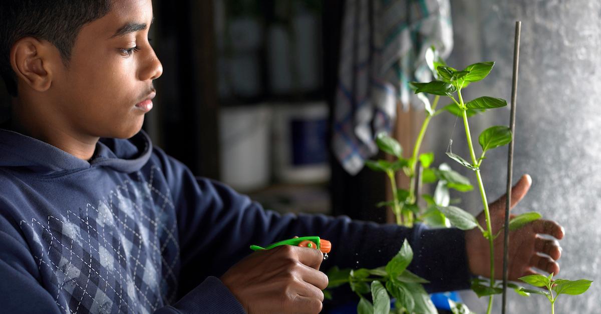 easiest vegetables to grow in pots