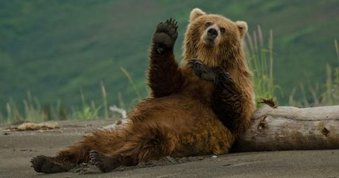 fat-bear-week-1601493682334.jpg